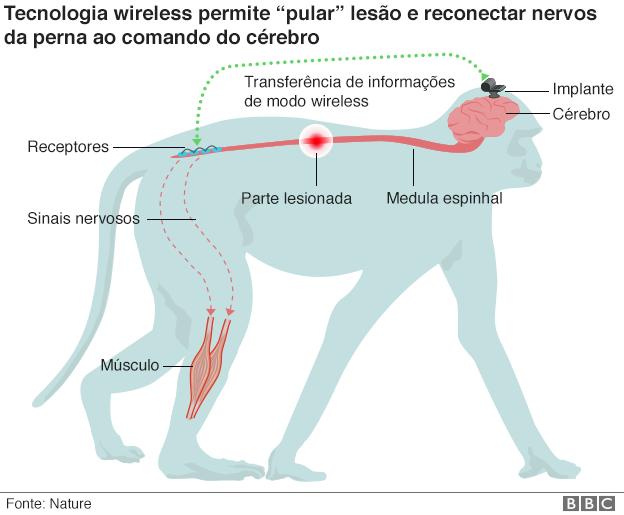 Tecnologia wi-fi ajuda a reverter paralisia em macacos
