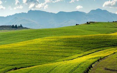Brasil terá monitoramento digital de doenças agrícolas contra perdas bilionárias