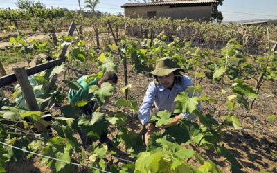 Plataforma virtual promete agilizar Cadastro Ambiental Rural