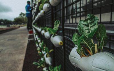 40 startups voltadas à área socioambiental são selecionadas para participar do InovAtiva de Impacto 2020